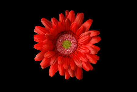 Red  flower  in  black Stock Photo