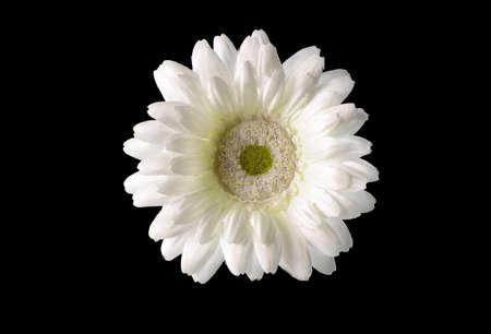 white  flower  in  black Stock Photo