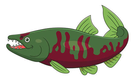 Cartoon cute chum salmon