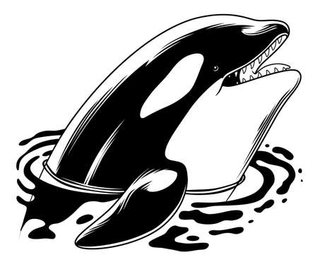 jaws: Orca stuck out head of the water Illustration