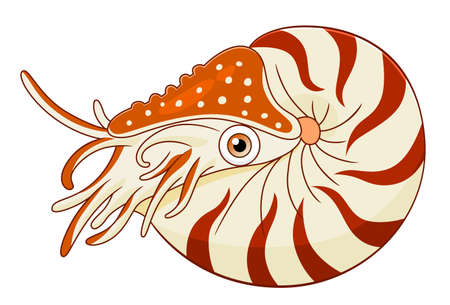 nautilus: Cartoon cute nautilus