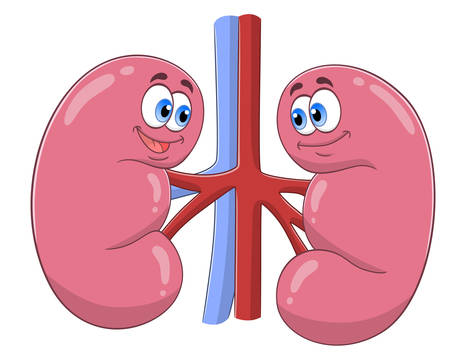 Cartoon cute kidneys