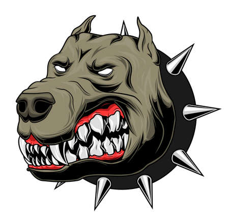 Boze pitbull met kraag
