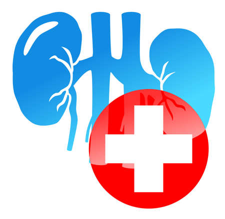 Medical cross and kidneys