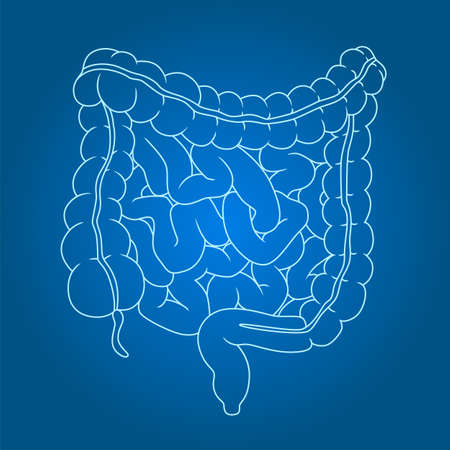 Healthy intestines line illustration on gradient background