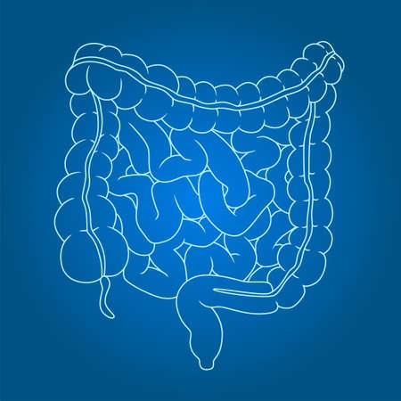 Healthy intestines line illustration on gradient background