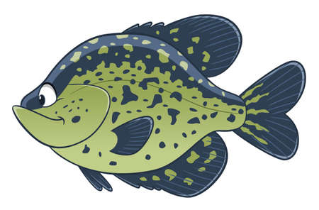 Cartoon cute black crappie fish. Freshwater fish