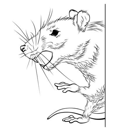 Rat black and white illustration. Pest vector illustration.