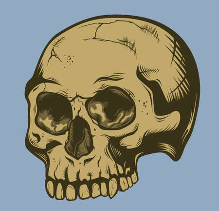 Human stylized skull without jaw. Colored art. Illustration