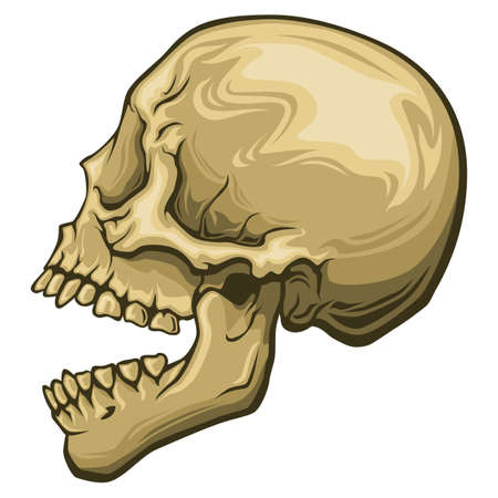 Human stylized skull with open mouth Illustration