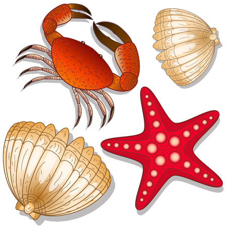 Set of marine inhabitants. Crab, starfish and shell. White background. Isolated objects
