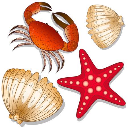 Ensemble d'habitants marins. Crabe, étoile de mer et coquille. Fond blanc. Objets isolés