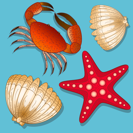 Set of marine inhabitants. Crab, starfish and shell. Isolated objects