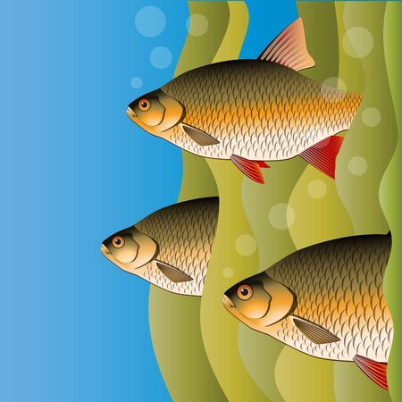 Redfins flock. Fish look out of algae. Under the water. Bright colors. Vector illustration.