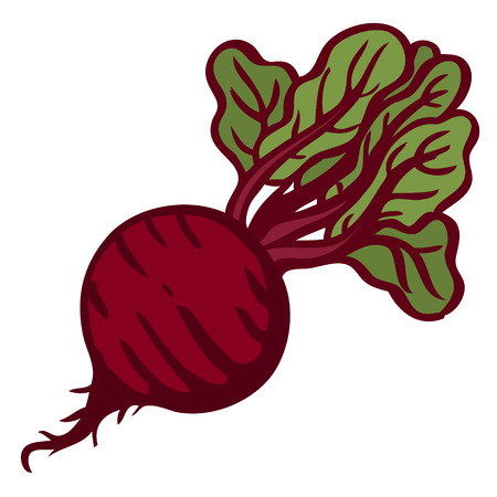 Beet. Isolated object. White background Vector illustration