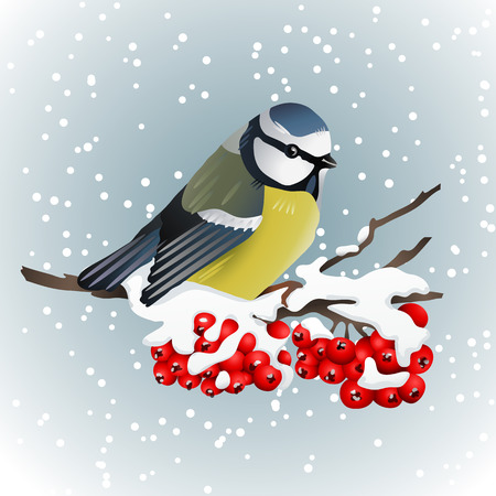 Titmouse sitting on snow-covered branch of mountain ash. Winter nature. Vector illustration