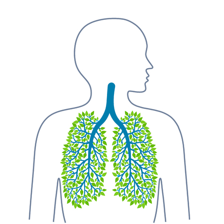 Human lungs. Healthy clean lungs. Bronchial tree.Human lungs. Healthy clean lungs. Bronchial tree. Ecology medicine and health. Healthy lifestyle. Vector illuiostration.
