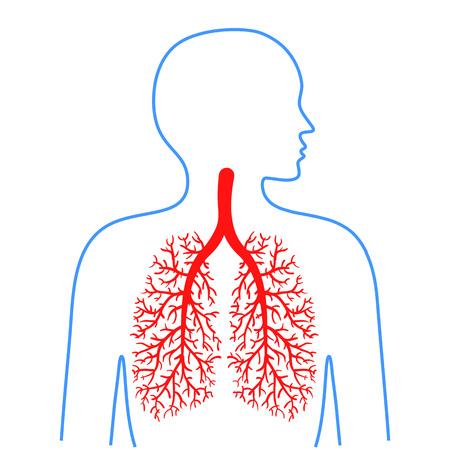 Longen en bronchiën, menselijke luchtwegen. Geneeskunde en gezondheid. Vector illustraties.