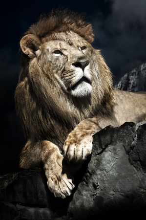 lions rock: Male African Lion (Panthera leo) on top of a rock Stock Photo