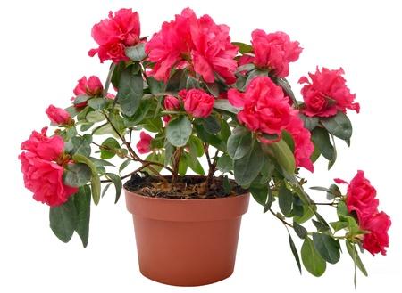 flower pot: flower pot Stock Photo