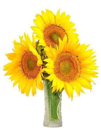 helianthus: sunflowers in a glass vase - Helianthus annuu