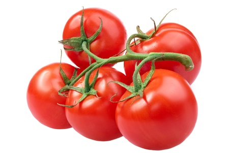 Closeup of tomatoes on the vine isolated on white photo