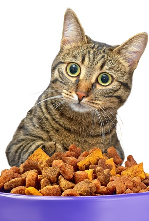 Cat eating dry cat food from metal bowl photo