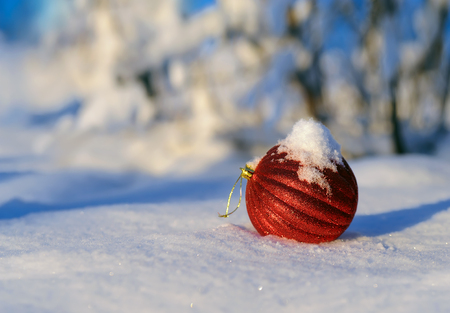 christmas red: Christmas red balls on a background snow-covered fir branches