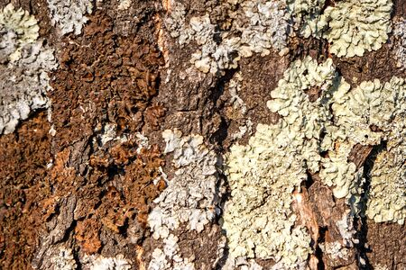 Texture of large tree bark close up