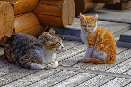 Daddy cat and red-haired kitten sitting on a wooden floor