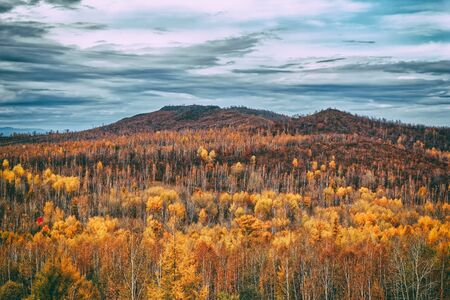 Yellow autumn forest and frowning dark sky