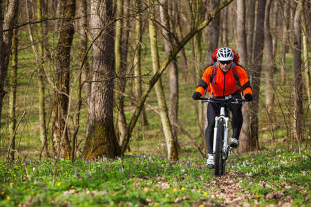 cycler: Cyclist Riding the Bike on the Trail in the Beautiful Spring Forest Wide Angle