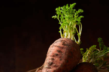 Bundle of carrots with soil over rustic wooden background, side view, close-up, selective focus, low key. Harvesting bunch. Fresh raw carotene. Unpeeled tasty roots. Healthy food background.
