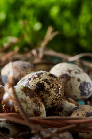 Nest made of branches with fresh spotted quail eggs on the blue background, top view, close-up, selective focus. Conceptual Easter still life. Decorative rural composition. Healthy eating. Easter background. Healthy food concept.
