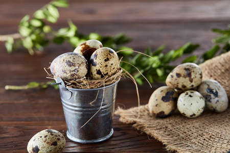 Spring composition of fresh quail eggs in decorative metal bucket with some hay on a homespun napkin and boxwood branches on rustic wooden background, selective focus, close-up. Beautiful rural still life. Healthy dieting concept. Stock Photo