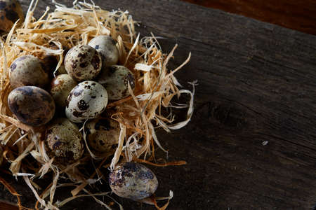 Conceptual still-life with quail eggs in hay nest over dark wooden background, close up, selective focus Standard-Bild