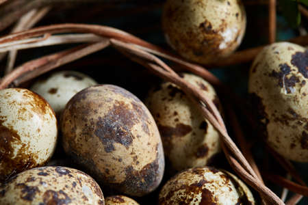 Quail eggs on old brown wooden surface with green blurred natural leaves background, selective focus, close-up Standard-Bild