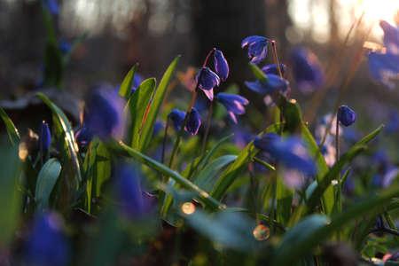 春の夕日 写真素材