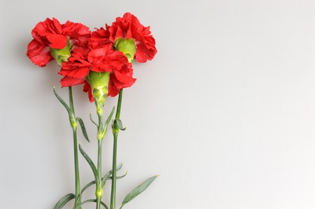 Three red carnations on gray background
