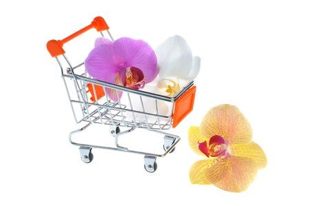 carretilla de mano: Flores de la orqu�dea en la carretilla de mano aislados en blanco Foto de archivo