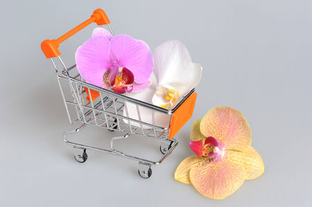 Orchid flowers in pushcart on gray background photo