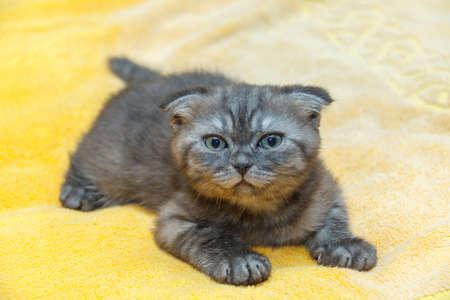 catlike: Kitten on red blanket