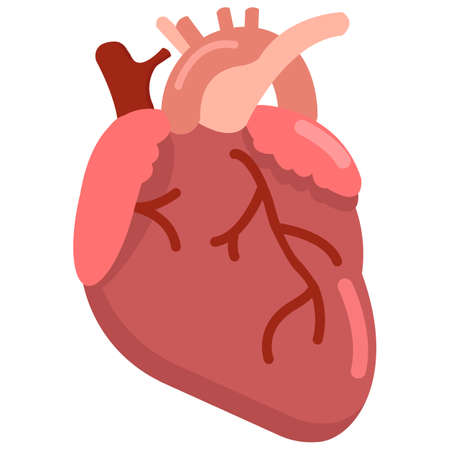 Human heart organ icon, vector illustration flat style design isolated on white. Colorful graphics Illustration