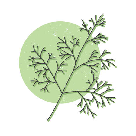 Fresh dill hand drawn icon, dill herb colorful vector illustration for printing
