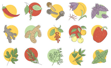 Condiments and herbs hand drawn icons set, spices herbs colorful vector illustrations for printing