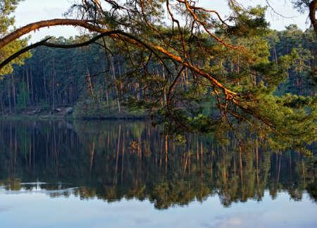 branche pin: Pine branch sur le lac au coucher du soleil