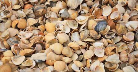 micro climate: Many Seashells as background, close-up, shallow DOF