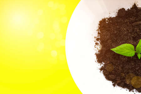 white plate with soil and seedling are growing from the rich soil to the morning sunlight that is shining, ecology concept. yellow background. Top view. Home gardening, ecology concept