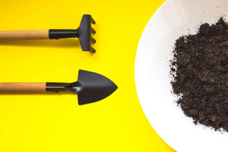 Miniature tools for planting small houseplants. Copy space. Zero waste, growing step concept. Home gardening, seedling, cultivation. agriculture, horticulture Reklamní fotografie