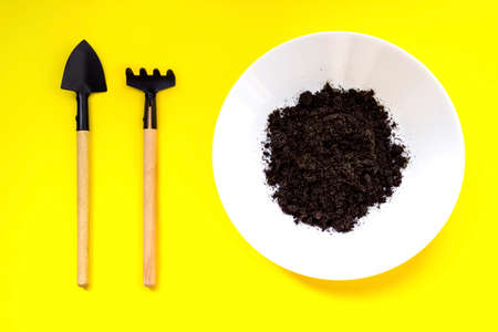 Miniature gardening tools, plate with ground on yellow background. Home gardening, growing step concept. Plant Germination And Growth